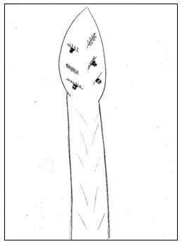 ציור עץ לדוגמא מבחני מיון לעבודה